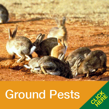 AFM-home-Ground-pests-1