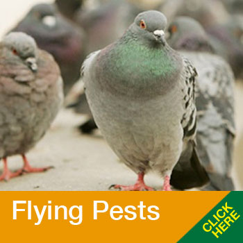 AFM-home-flying-pests-1